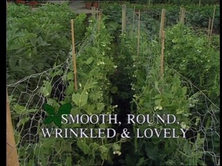 Kitchen Garden: Smooth, Round, Wrinkled & Lovely