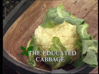 Kitchen Garden: The Educated Cabbage