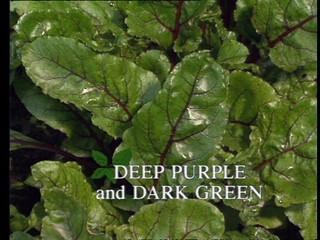 Kitchen Garden: Deep Purple and Dark Green