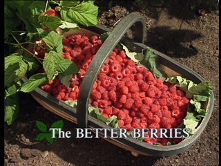 Kitchen Garden: The Better Berries