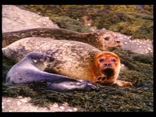 Natural Selection: Seals for Tomorrow