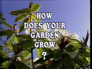 How Does Your Garden Grow?: Maisie Michael