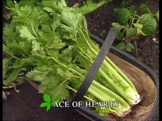 Kitchen Garden: Ace of Hearts (extended version)